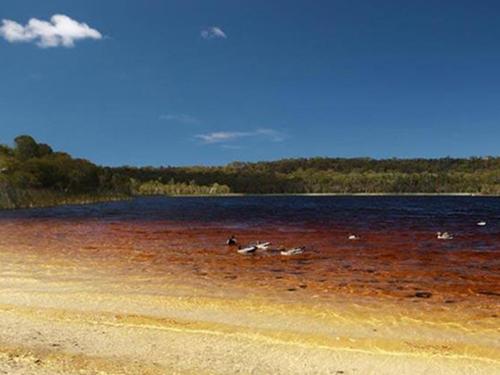 tea-tree lake with birds on it